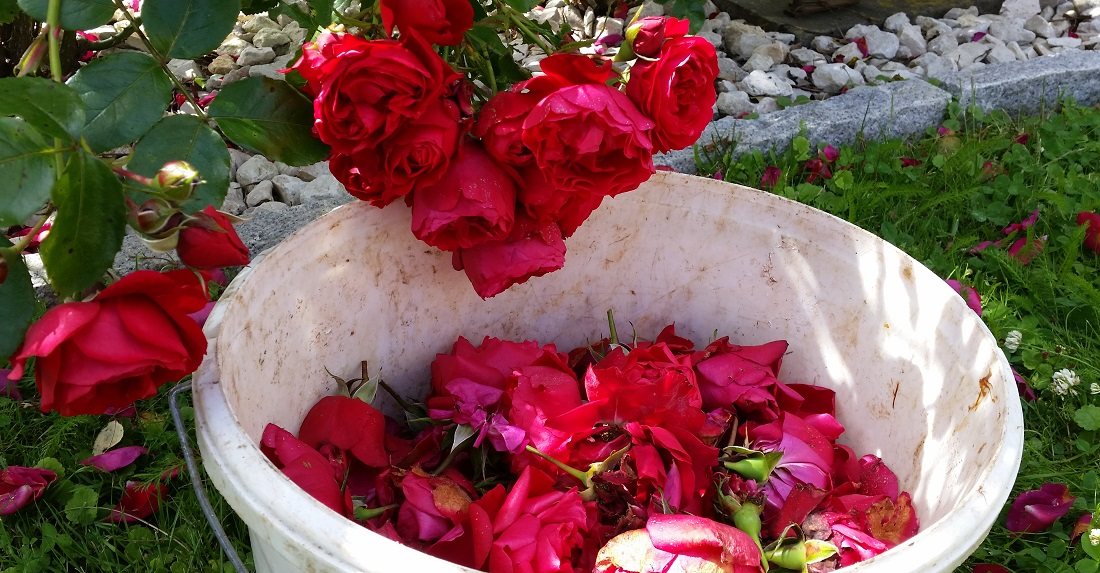 gartenradio der garten im juli b hne frei f r die rosen. Black Bedroom Furniture Sets. Home Design Ideas