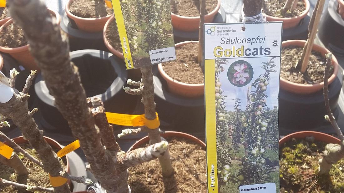 Gartenradio Der Garten Im April Pflanzen Für Kleine Gärten