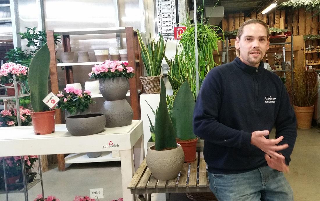 Beliebt Bevorzugt GartenRadio - Zimmerpflanzen - die grünen Nieren &KZ_92
